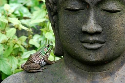 Buddha-with-Frog