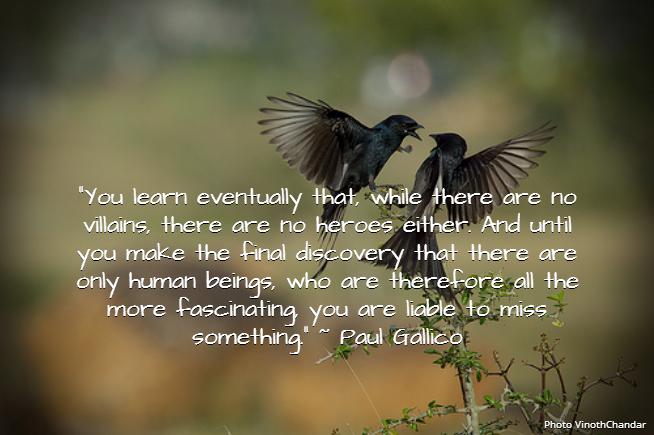 Paul Gallico quote