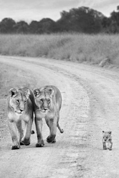 lions rainforest site
